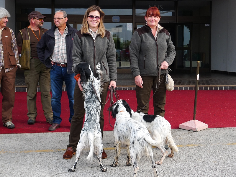 Evropa Cup English Setters 2012 autumn