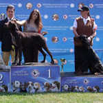 2009 HR - CACIB Dog Show