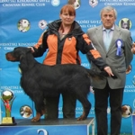 2010 HR - CACIB Dog show